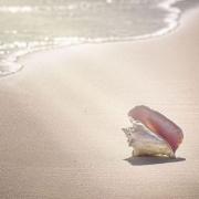 什么时间吃盐藻最佳?天光牌盐藻素如何?