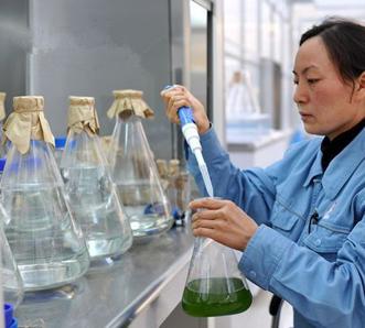 天光牌盐藻素科研人员