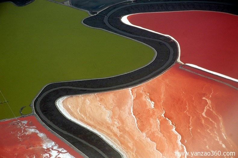 国内有哪些盐藻培育基地?
