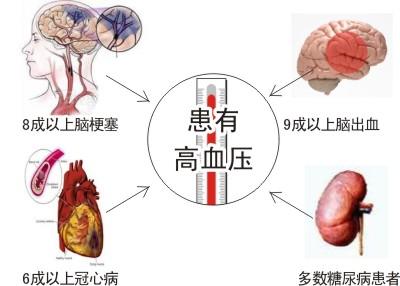 盐藻治疗高血压