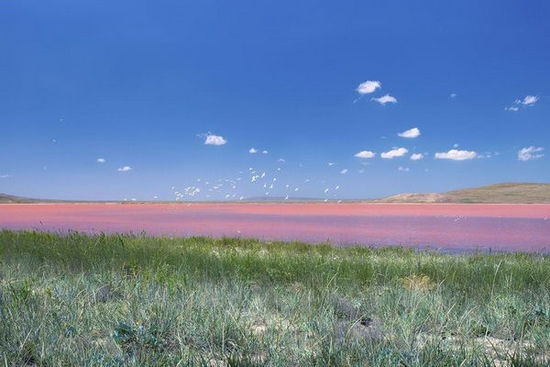 乌克兰的Koyashskoe盐湖